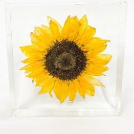 Studio Flower Preservation 4 - ArtsyFlower.com